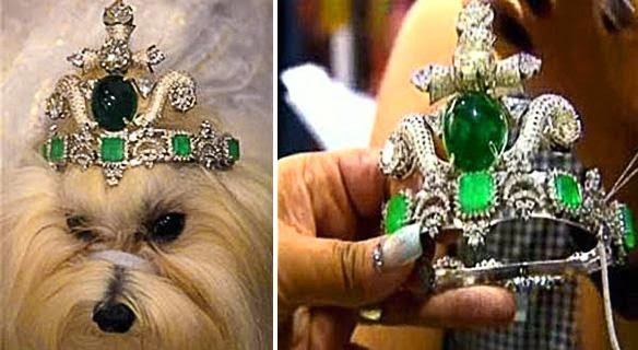 behold-the-most-expensive-dog-tiara-in-the-wo-L-Mb5tII.jpg