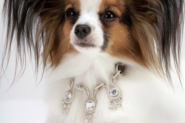 Amour-Amour-Dog-Collars.jpg